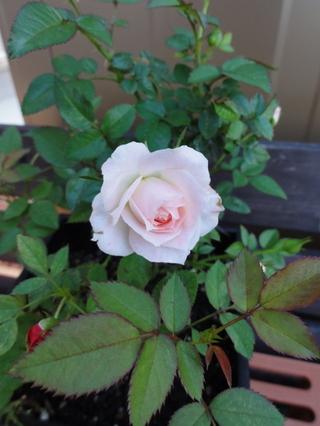 201110805_flower_02