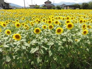 20110818_flower_01